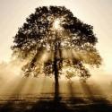 Energija Dreves - Keltski Reiki I, II, IV (enodnevna, hrana, napitki, priročnik, izobraževanje in inicializacija)